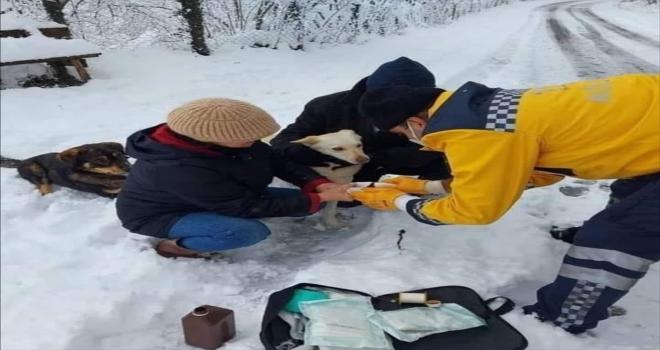 Bakan Koca, yaralı köpeğe müdahale eden paramedik Mustafa Baran'ın fotoğrafını paylaştı: