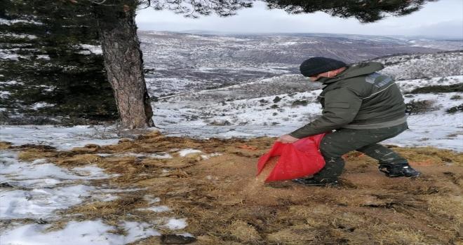 Beypazarı Milli Parklar Şefliği doğaya yem bıraktı