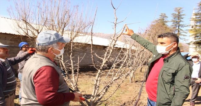 Elmalı'da çiftçilere budama eğitimi verildi