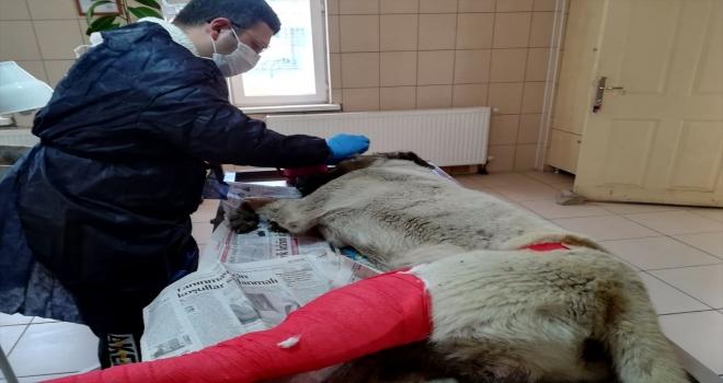 Kırşehir'de bir ayda 20 yaralı sokak ve yaban hayvanı tedavi edildi