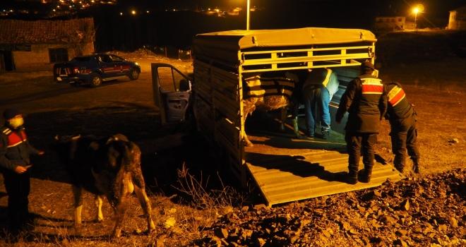 Konya'da 6 büyükbaş hayvanı çalan 4 şüpheli yakalandı