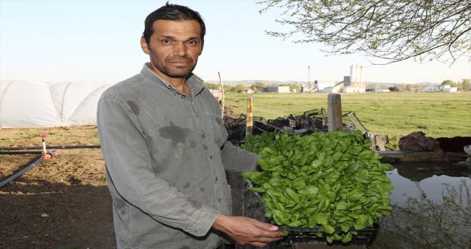 Ankaralı sebze toptancısı aradığı yeşilliği bulamayınca kurduğu serasından ilk mahsullerini aldı