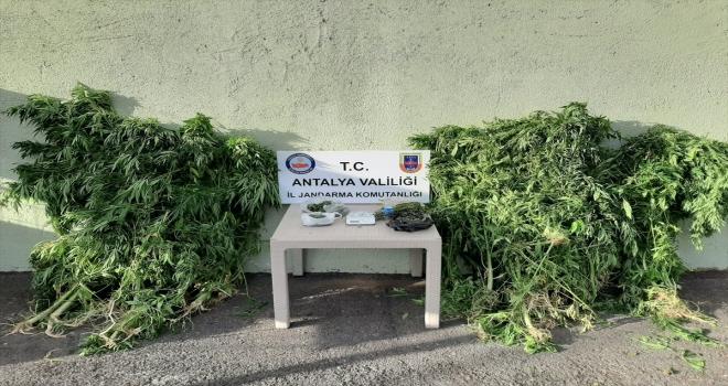 Antalya'da Hint keneviri yetiştirilen eve düzenlenen operasyonda bir zanlı yakalandı