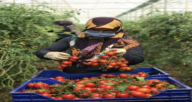 Antalya'da sera üreticileri zorlu mesailerini ramazanda da sürdürüyor