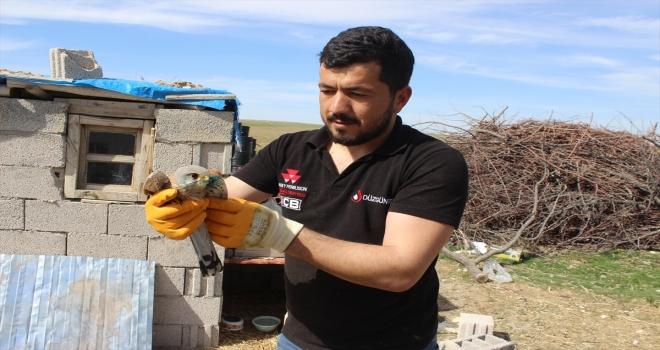 Karapınar'da bulunan yaralı şahin, tedavisinin ardından doğaya salındı