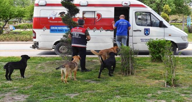 Ankara Büyükşehir Belediyesinden sokak hayvanlarına mama desteği