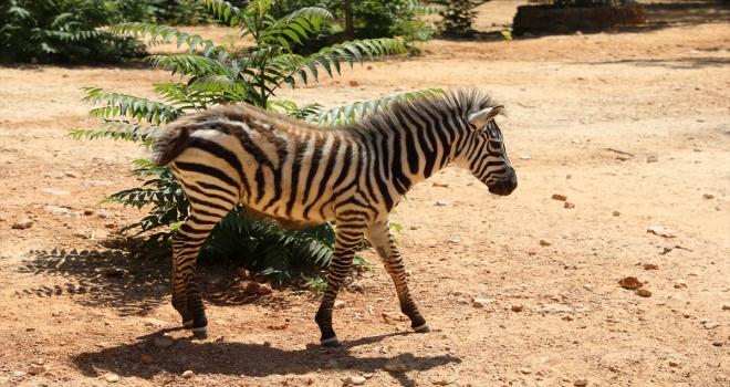 Antalya'da hayvanat bahçesindeki yeni yavrular ilgi odağı oldu