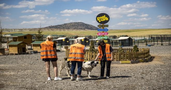 Başkentte hayvanseverlerin inşa ettiği 1000 köpek kapasiteli