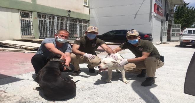Eskişehir'de bir iş yerinden köpek çaldıkları iddia edilen 3 şüpheli yakalandı