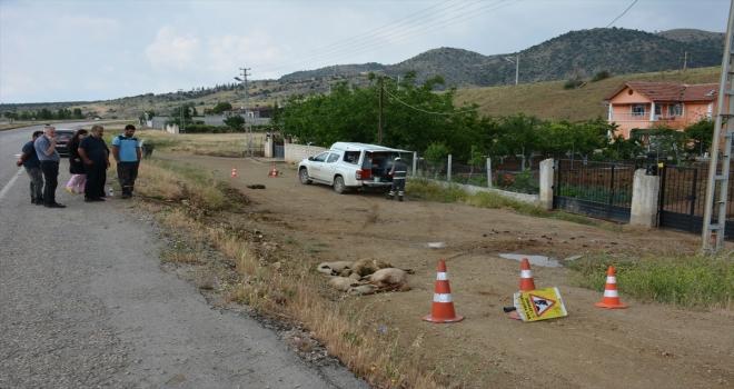 Kırıkkale'de elektrik akımına kapılan 15 koyundan 4'ü telef oldu