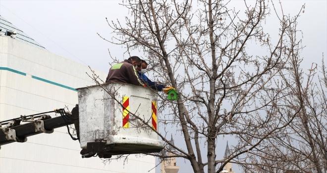 Konya'da kuşlar için 1250 yeni kuş evi