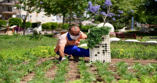 Muratpaşa'da park ve bahçelere 500 bin çiçek dikiliyor