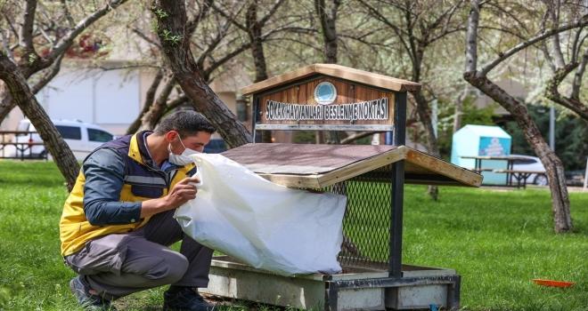 Nevşehir Belediyesi ekipleri sokak hayvanlarını unutmadı