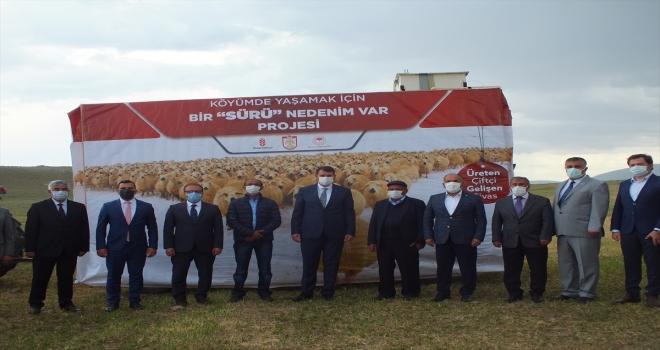 Ulaş'ta 750 baş koyun dağıtımı gerçekleştirildi