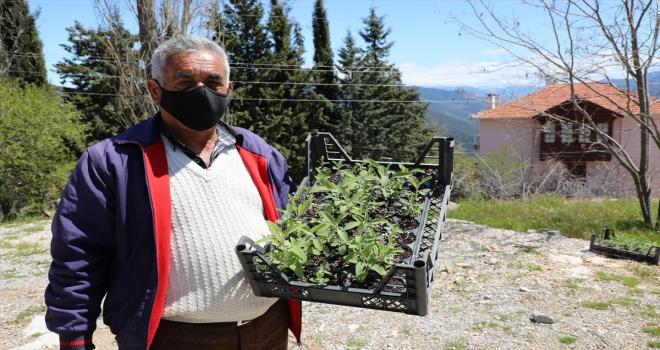 Antalya'da tıbbi ve aromatik bitki üretimine destek veriliyor
