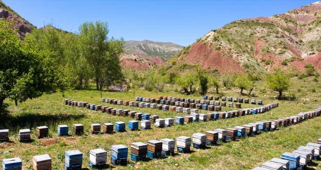 Bitki türü bakımından zengin olan Sivas'ın Zara ilçesi arıcıların favorisi