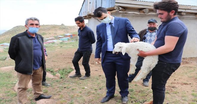 Suşehri'nde projeden faydalanan besiciye 100 koyun verildi
