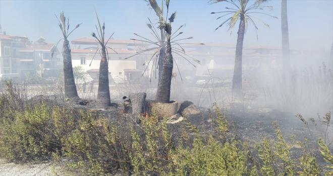 Antalya'da çıkan yangında çok sayıda tropikal bitki fidanı zarar gördü