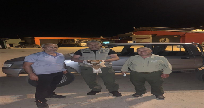 Bala ilçesinde yaralı olarak bulunan şahin tedaviye alındı