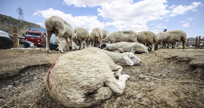 Başkentte bayramın üçüncü gününde de hayvan pazarlarında kurban satışları sürüyor