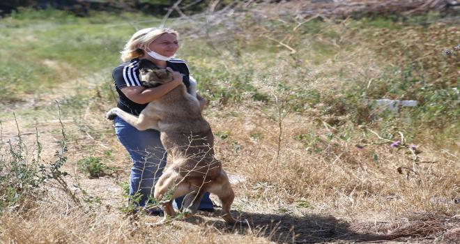 Eskişehir'de sokak hayvanlarını beslediği sırada darbedildiğini öne süren kadın, hayvanları yalnız bırakmıyor