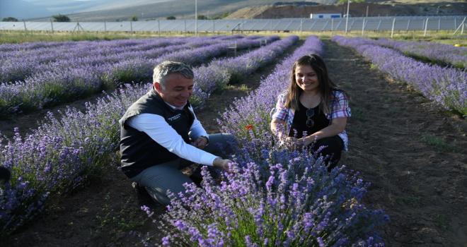 İl Tarım ve Orman Müdürü Şahin'den lavanta üreticisi kadın çiftçiye ziyaret