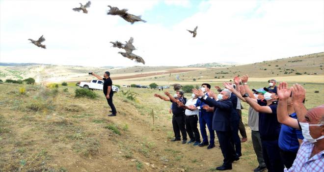 Kırşehir'de yaban hayatı çeşitliliğinin korunması için 425 kınalı keklik doğaya bırakıldı