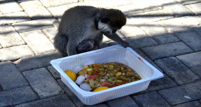 Konya'da sıcaktan bunalan hayvanlara buzlu et ve meyve kokteyli