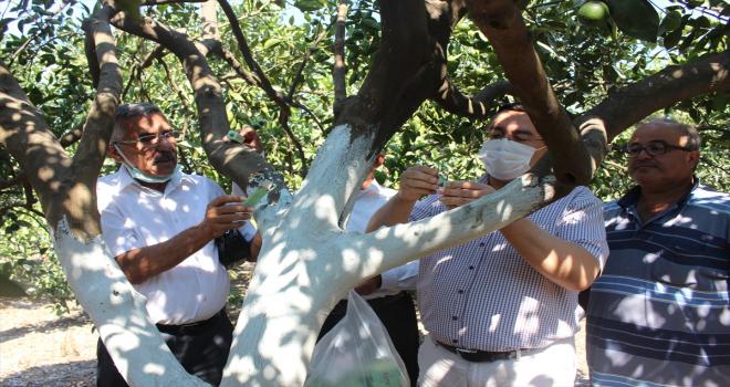 Kumluca'da 38 üreticiye zararlılarla mücadele için faydalı böcek dağıtıldı
