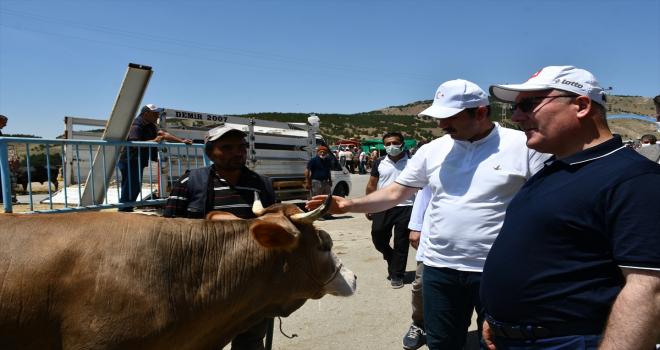 Sivas'ta Vali ve Belediye Başkanı, ihtiyaç sahipleri için pazarın en büyük iki kurbanlığını satın aldı