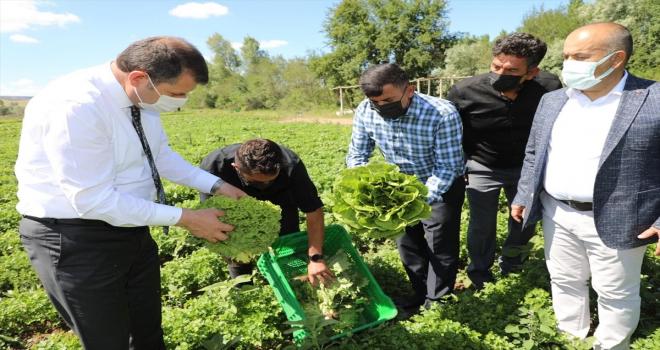Sivas Valisi Salih Ayhan, çiftçilerle hasat yaptı