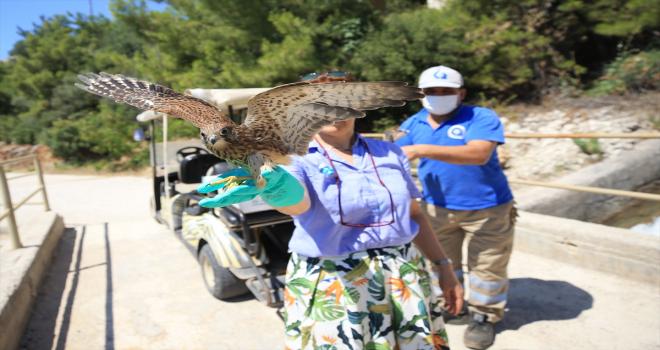 Yaralı yırtıcı kuşlar, tedavilerinin ardından özgürlüğe kanat çırpıyor