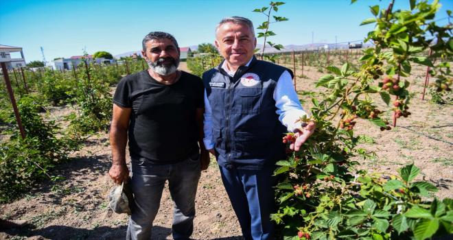 İl Tarım ve Orman Müdürü Şahin'den ahududu yetiştiriciliği önerisi