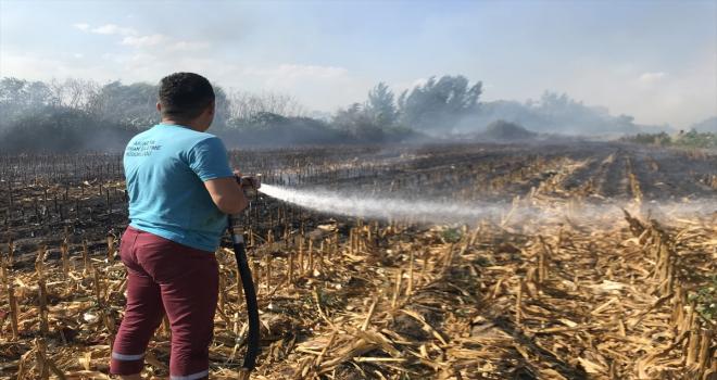 Antalya'da sazlık alana sıçrayan anız yangınına müdahale ediliyor