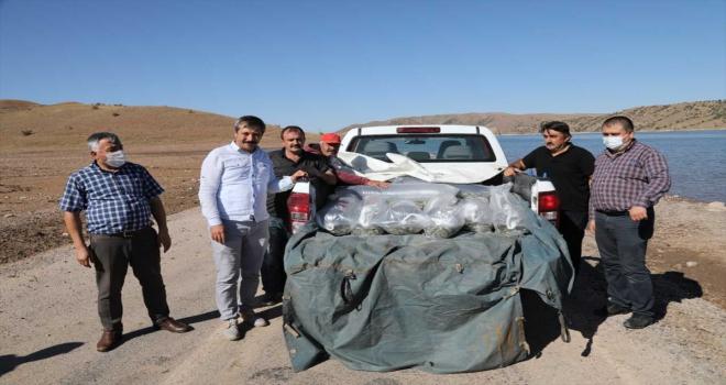 Kırıkkale'de baraj gölüne 100 bin pullu sazan yavrusu bırakıldı