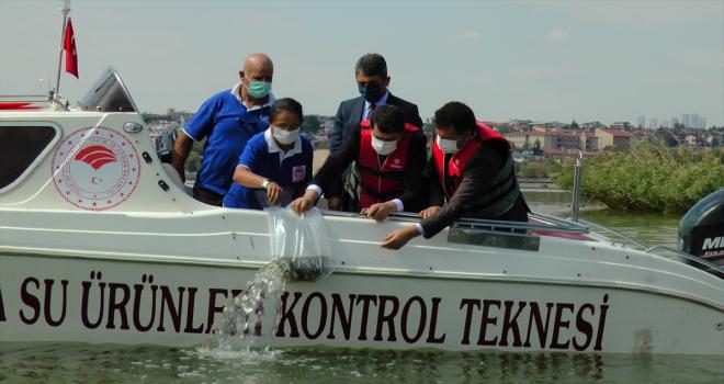 Mogan Gölü'ne 100 bin sazan yavrusu bırakıldı