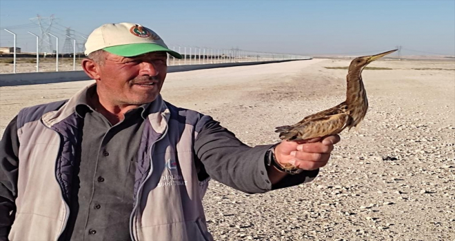 Aç kalan kuşa Karapınar'da çoban sahip çıktı