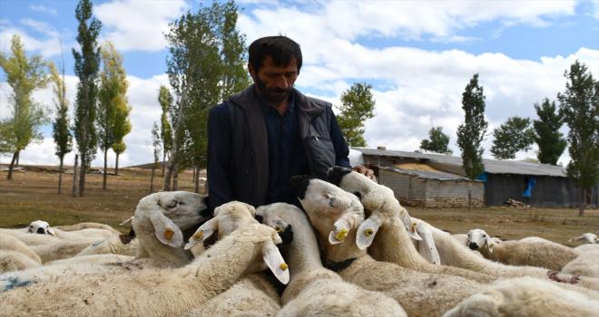 Ata mesleği hayvancılıkta devlet desteğiyle sürüsünü büyüttü