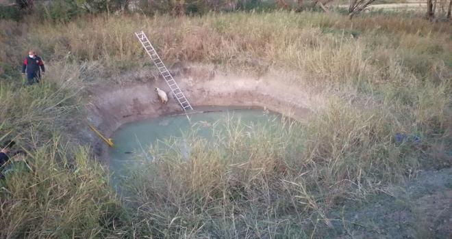 Sulama havuzuna düşen koyunu kurtarmak isteyen çocuk öldü