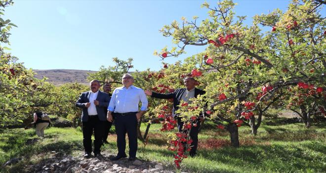Niğde'de elma üretimi 5 yılda yüzde 25 arttı