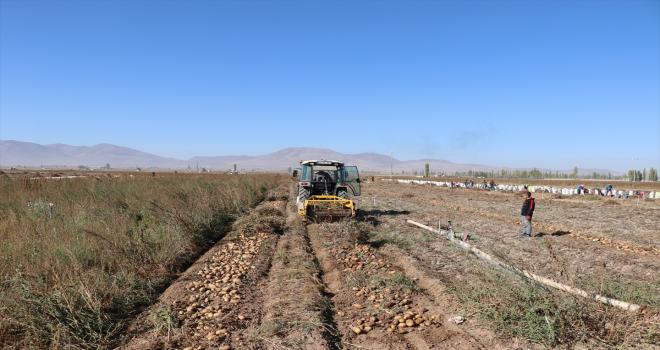 Patates deposu Niğde ve Nevşehir'de çiftçiler kaliteden de fiyattan da memnun