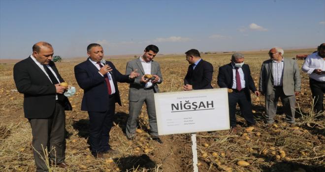 Yozgat'ta patates hasat edildi