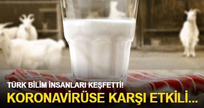 Keçi sütü koronavirüse karşı etkili protein içeriyor