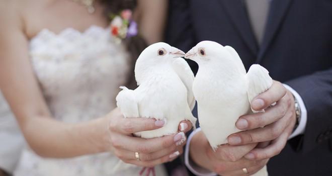 Özel Beyaz Nikah Güvercinleri