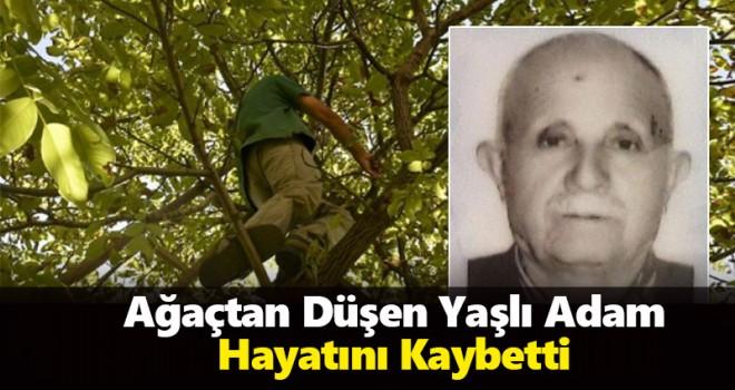 Ağaçtan düşen yaşlı adam hayatını kaybetti