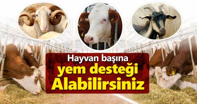 Küçük kapasiteli hayvancılık işletmelerine yem desteği
