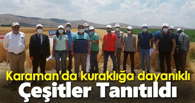 Karaman'da kuraklığa dayanıklı çeşitler tanıtıldı