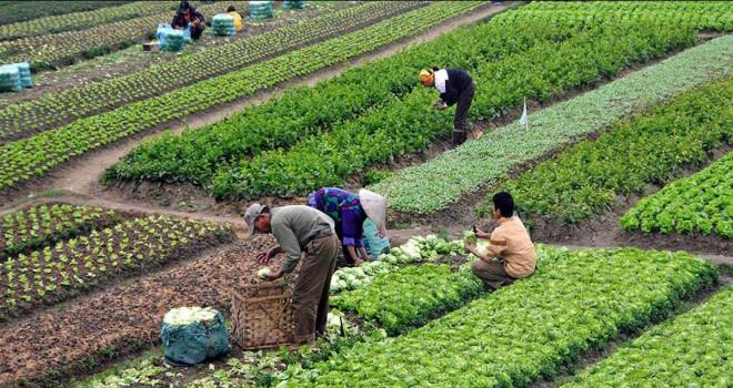 MEVKA'dan Organik Tarım Desteği
