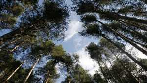 Karaşar-Eğriova yaylaları yaz aylarında misafirlerini bekliyor