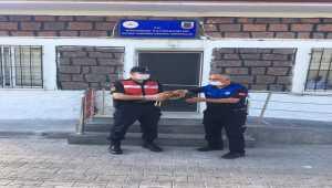 Kayseri'de jandarma tarafından yaralı bulunan şahin tedavi altına alındı